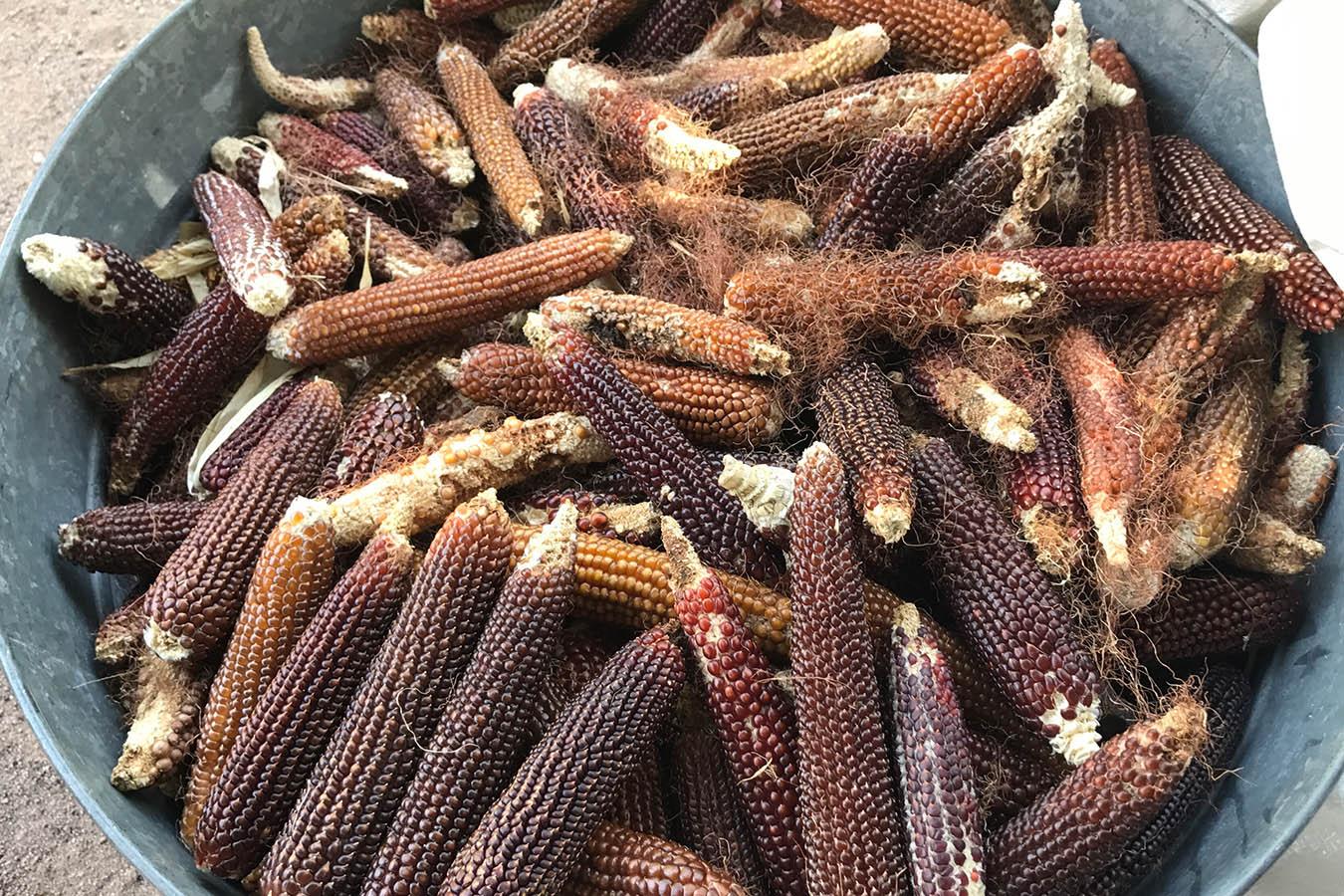 maiz chapalote pinole de palomitas harina de maiz harina natural corn flour harina de maiz nixtamalizado