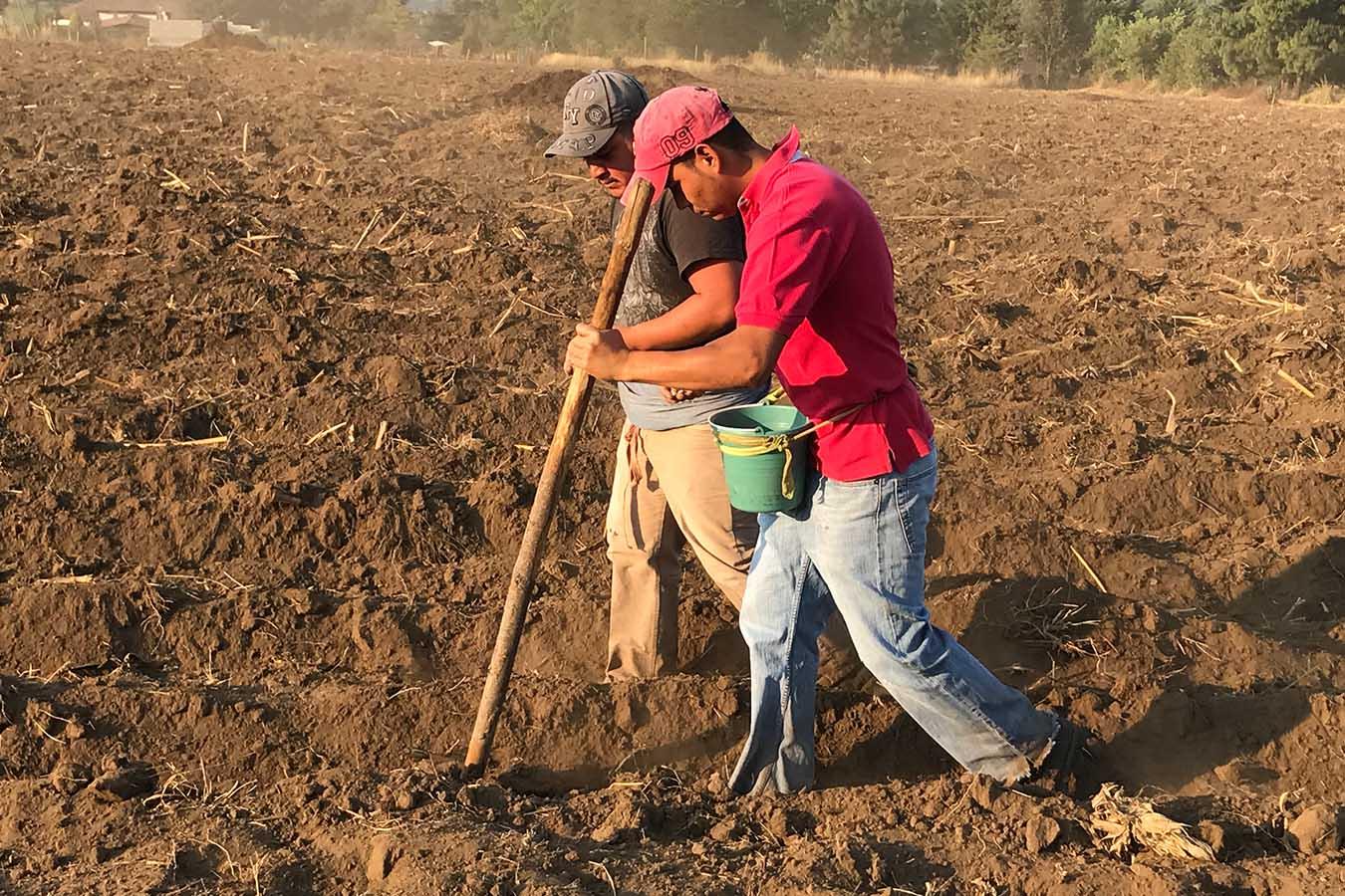 cal agricola venta dolomita calidra mejoramiento de suelo