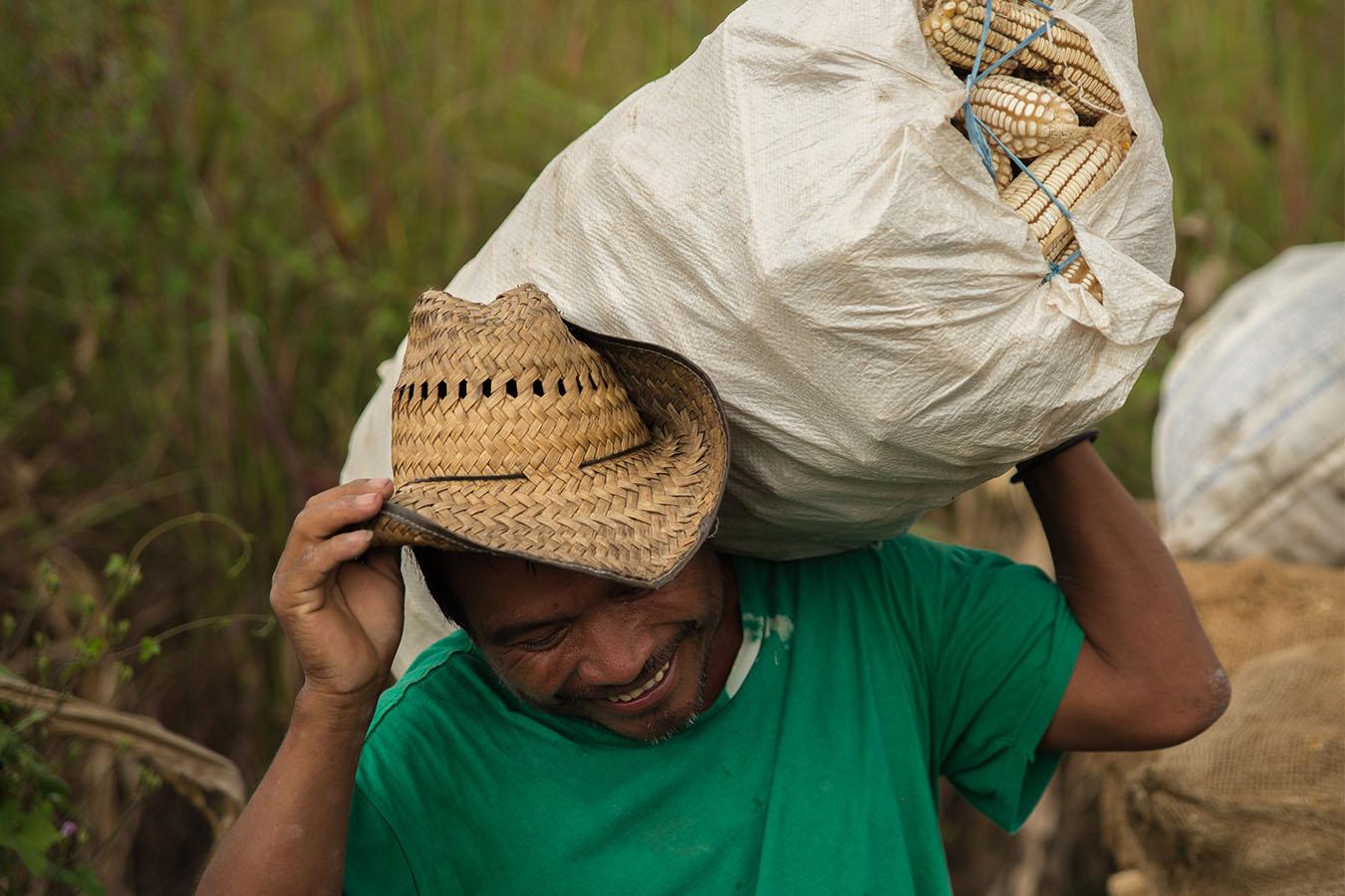 maiz criollo maiz mexicano maiz de chiapas