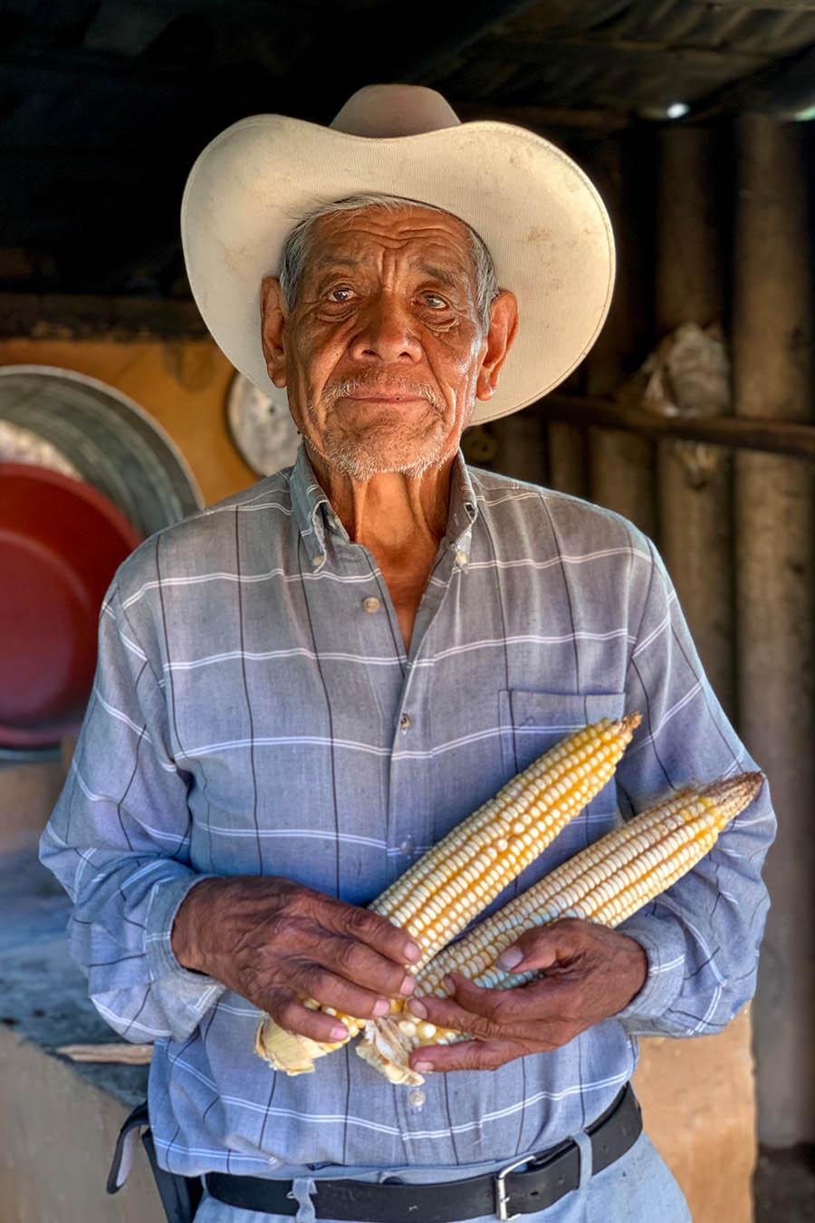 maiz criollo maiz jala maiz de humedo xala nayarit