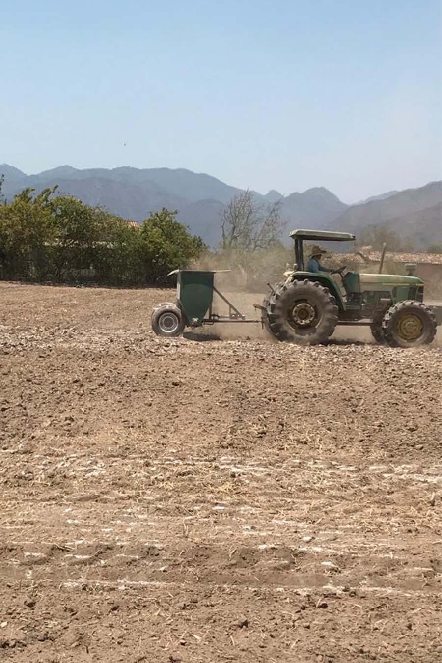 mejoramiento de suelo cultivable siembra de maiz cal agricola dolomita