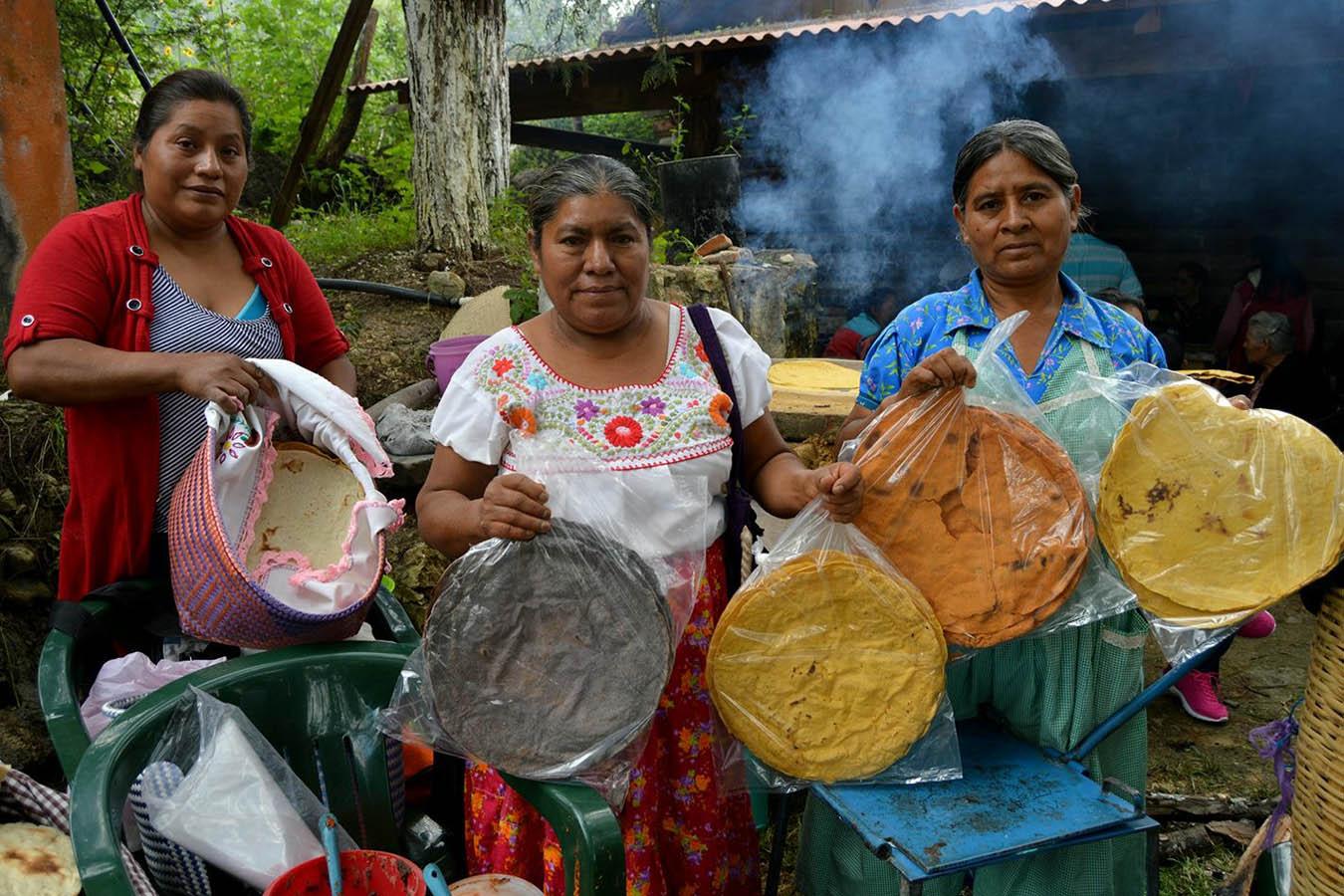 unidos por el maiz fundacion tortilla maiz mexicano maiz criollo