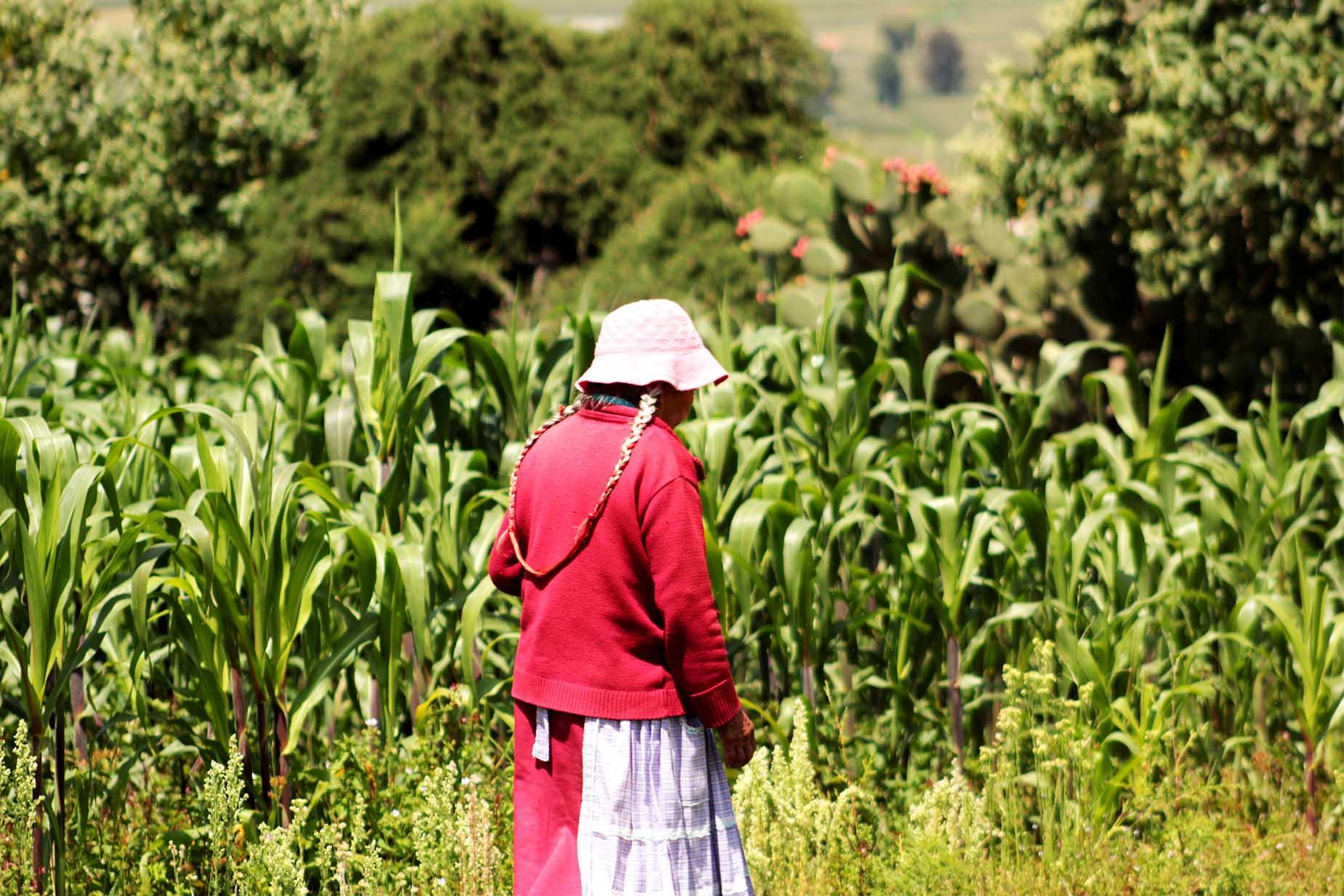 mujeres campesinas mujeres empresarias del campo mexicano productores de maiz mexicano